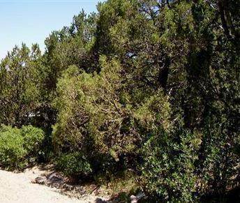 27 MEADOWLARK, Sandia Park, NM 87047