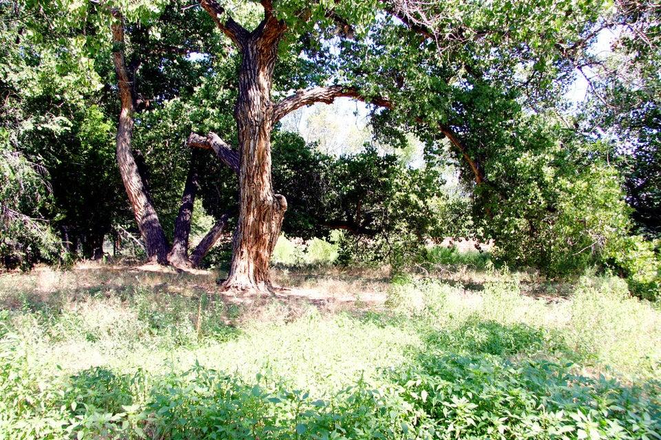 1001 Acequia Trail NW, Los Ranchos, NM 87107