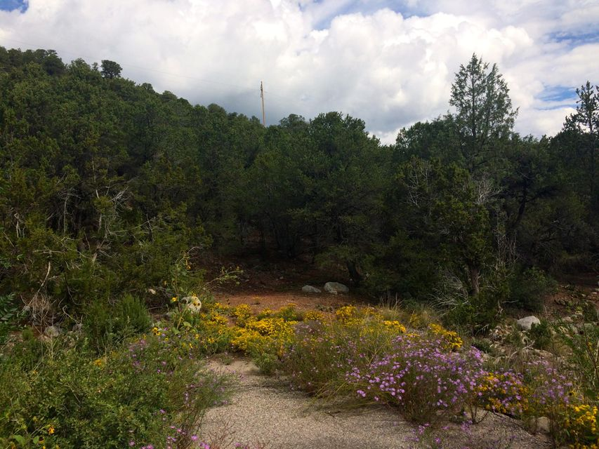 Forest Park Road, Cedar Crest, NM 87008