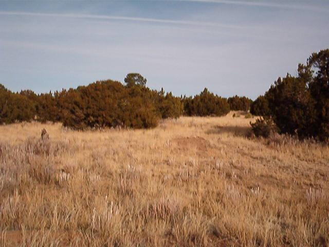 7 Cedar Tree Lane, Sandia Park, NM 87047