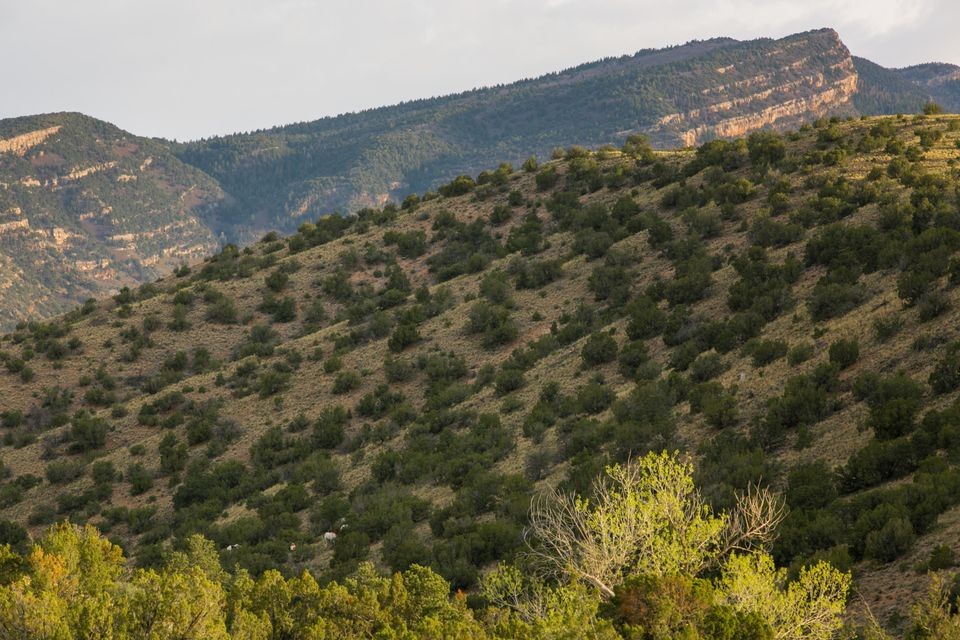 Loma Chata, Placitas, NM 87043