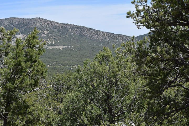 off Highway 344, Sandia Park, NM 87047