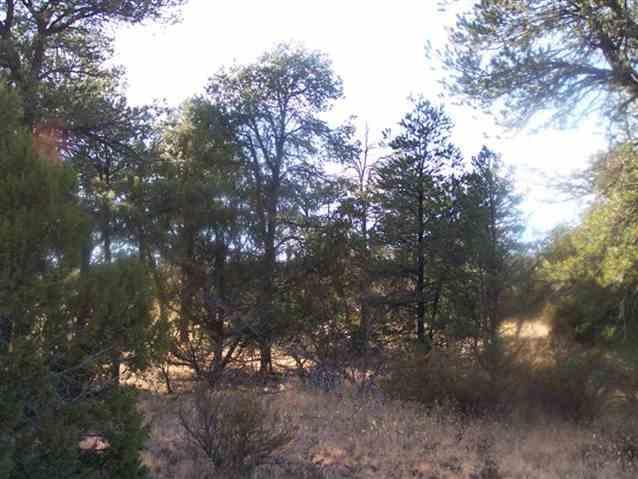 3356 APACHE Drive Overgaard, AZ 85933 - MLS #: 4318849