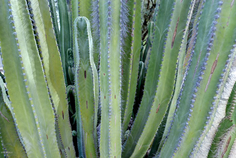 MLS 5517707 6601 E PARADISE Drive, Scottsdale, AZ 85254 Scottsdale AZ Desert Estates