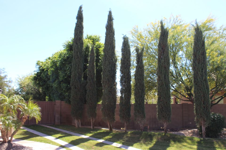 MLS 5586104 13110 W DENTON Street, Litchfield Park, AZ 85340 Litchfield Park AZ Gated