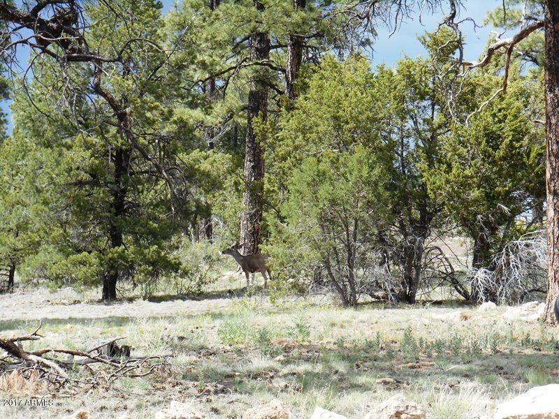 2126 Rimview Trail Overgaard, AZ 85933 - MLS #: 5627754