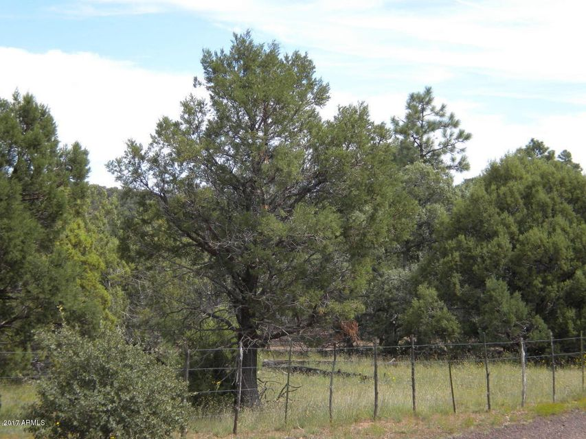1261 Turkey Hill Road Pinedale, AZ 85934 - MLS #: 5644233