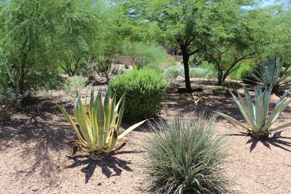 MLS 5653802 7221 E Canyon Wren Drive, Gold Canyon, AZ Gold Canyon AZ Golf