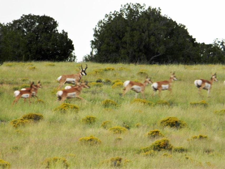 Lot 107 Chevelon Canyon Ranch #1 Overgaard, AZ 85933 - MLS #: 5653368