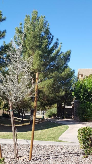 MLS 5685464 2024 S BALDWIN -- Unit 59 Building 20, Mesa, AZ 85209 Mesa AZ Augusta Ranch