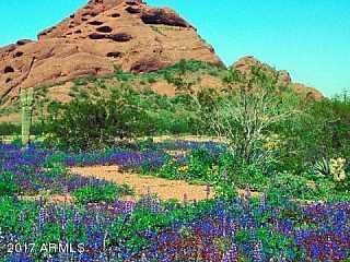 MLS 5688506 2320 N 52ND Street Unit 115, Phoenix, AZ Phoenix AZ Golf