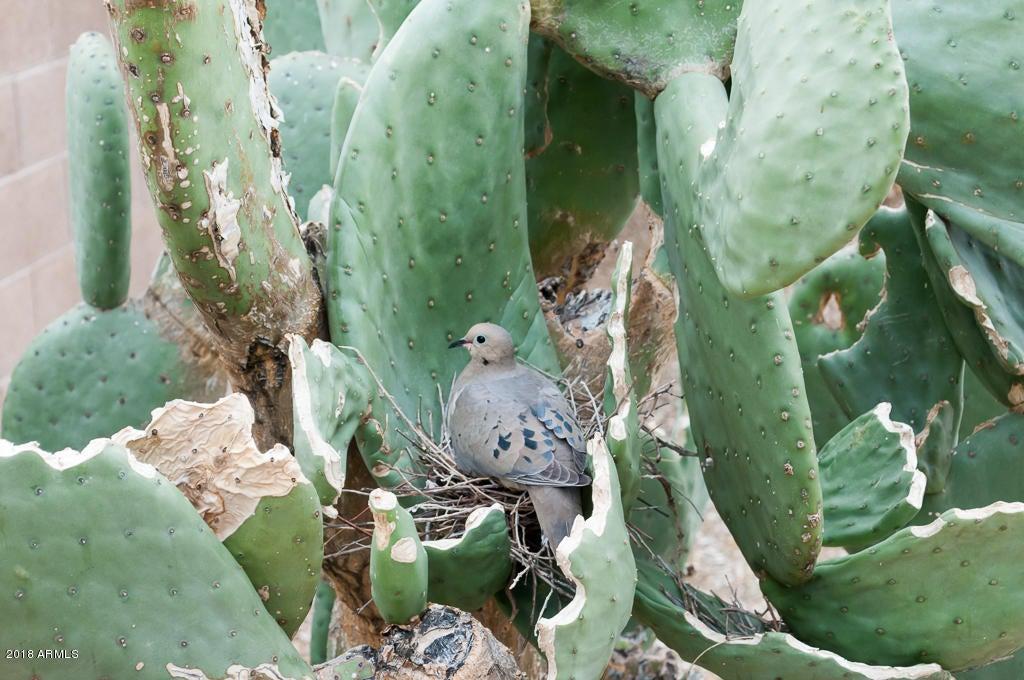 MLS 5741136 23219 N 23RD Street, Phoenix, AZ 85024 Phoenix AZ Desert Foothills Estates