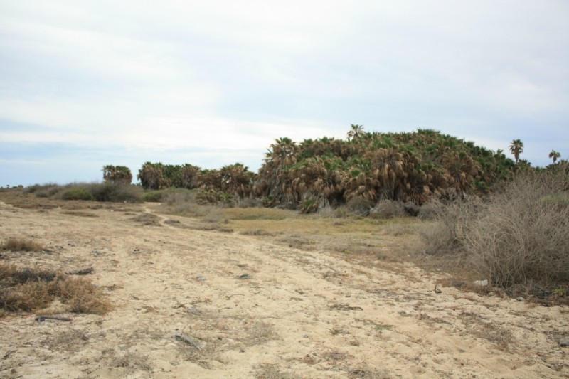Rancho Los Pinos/ El Surgidero-3