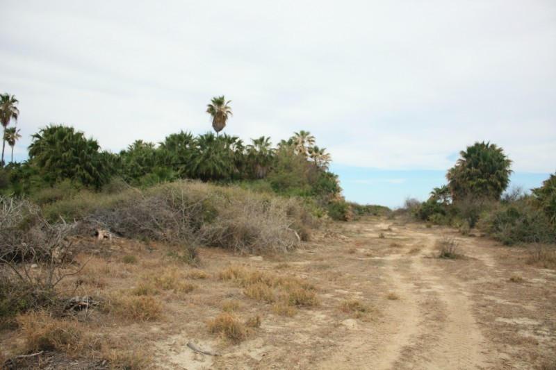 Rancho Los Pinos/ El Surgidero-5