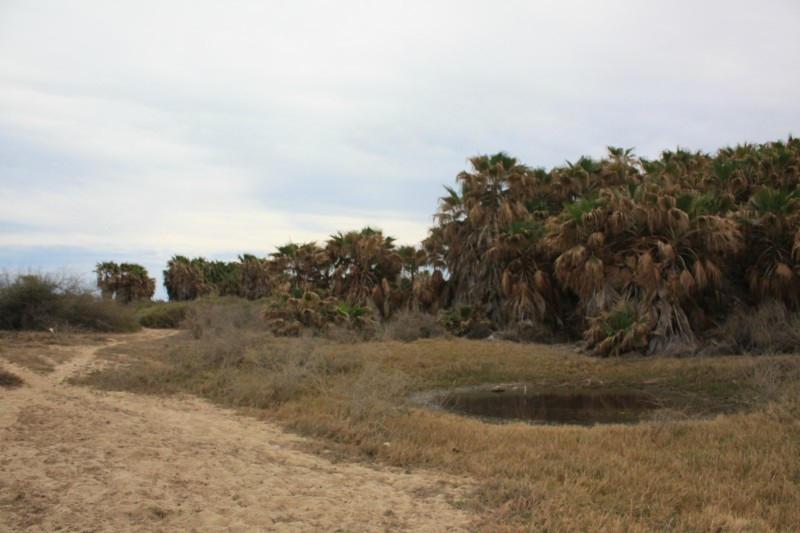 Rancho Los Pinos/ El Surgidero-7