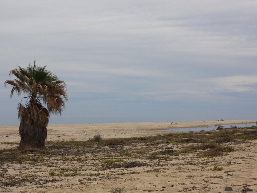 Rancho Los Pinos/ El Surgidero-10