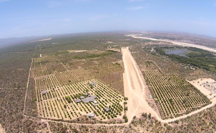 Rancho Mango Oasis-12