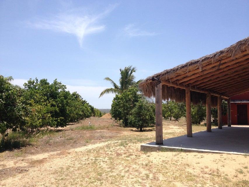 Rancho Mango Oasis-11