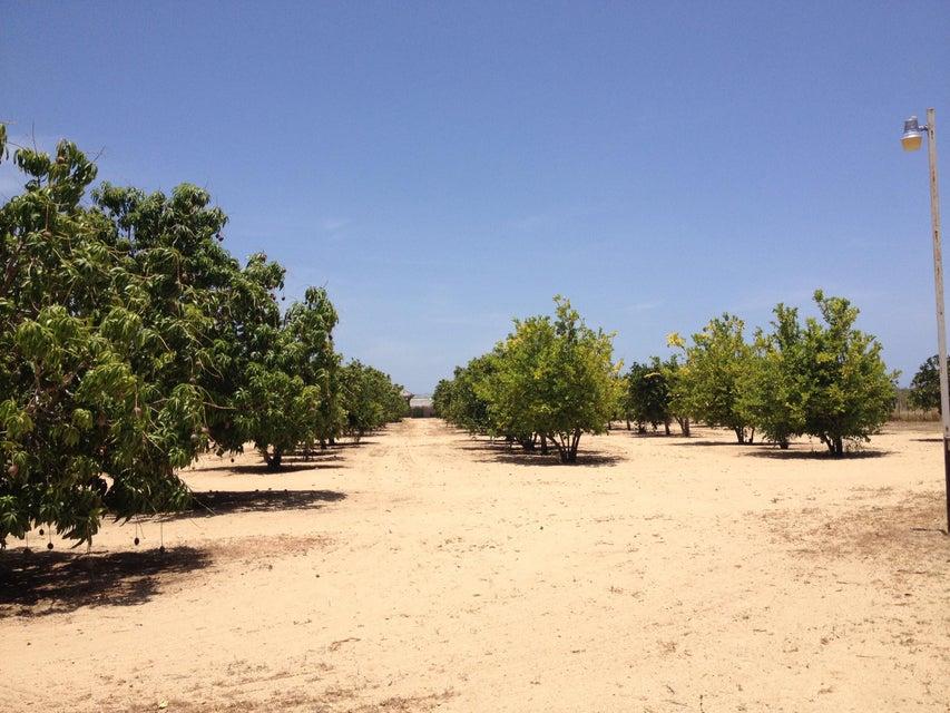 Rancho Mango Oasis-3