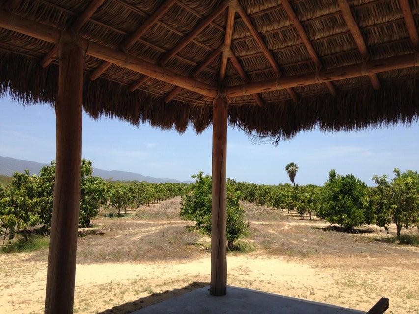 Rancho Mango Oasis-8