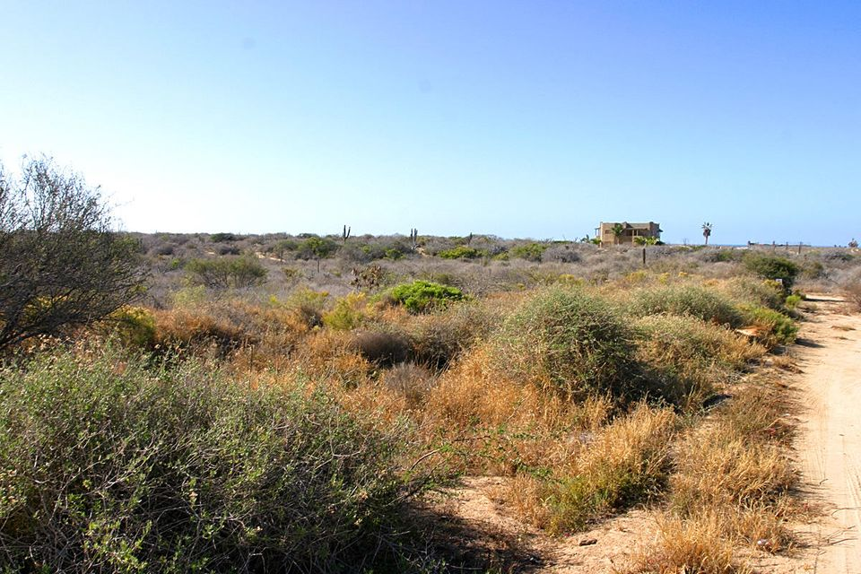 Cardon Lot LA Playa #4-3