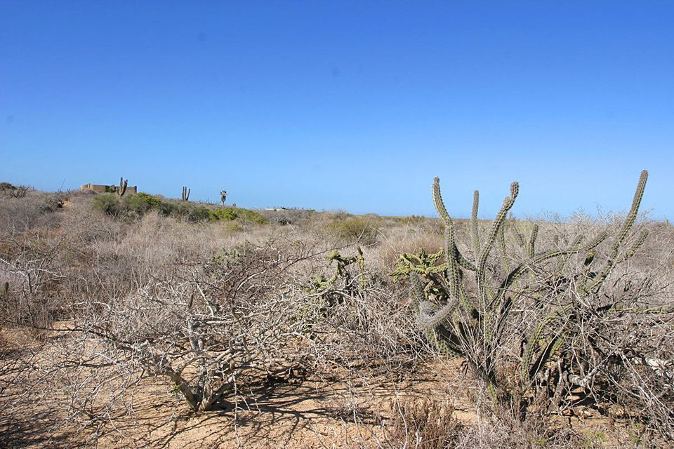 Cardon Lot La Playa #6-4