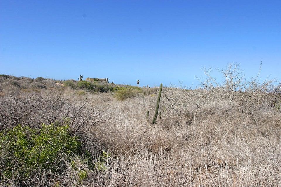 Cardon Lot La Playa #6-5