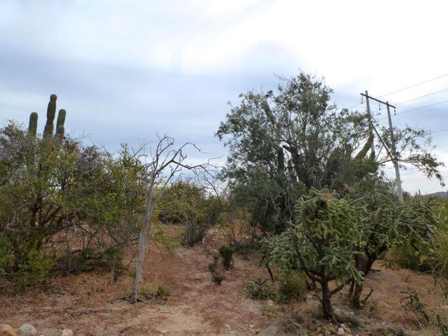 San Ysidro View Lot-2