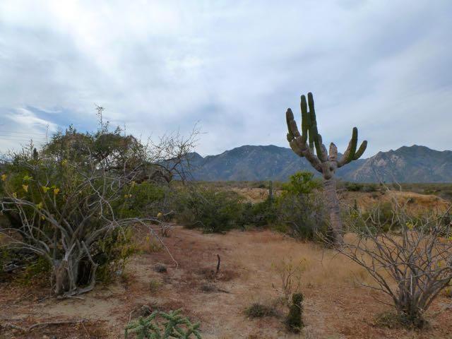 San Ysidro View Lot-4