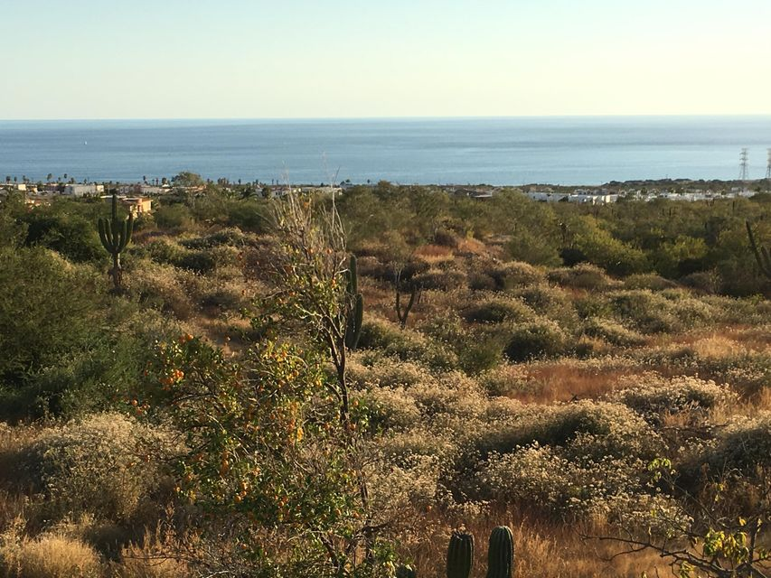 Cabo Orchard-4