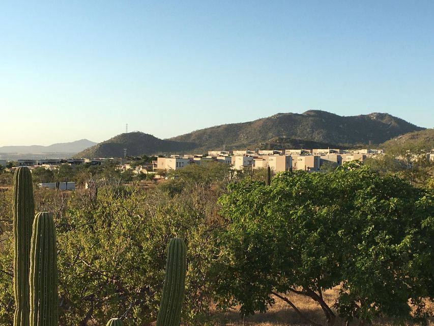 Cabo Orchard-8