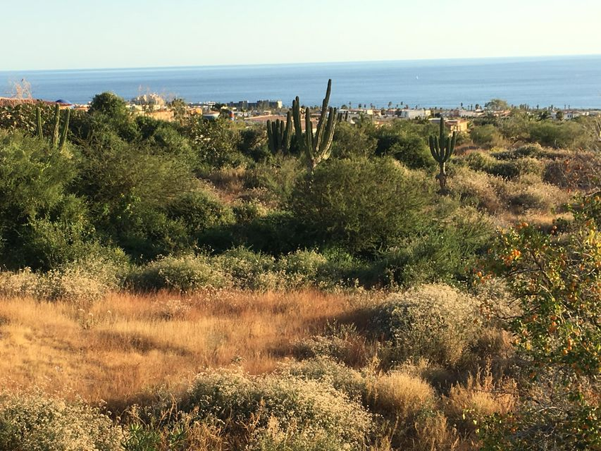 Cabo Orchard-7