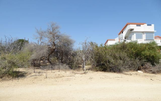 Pedregal Lot-5