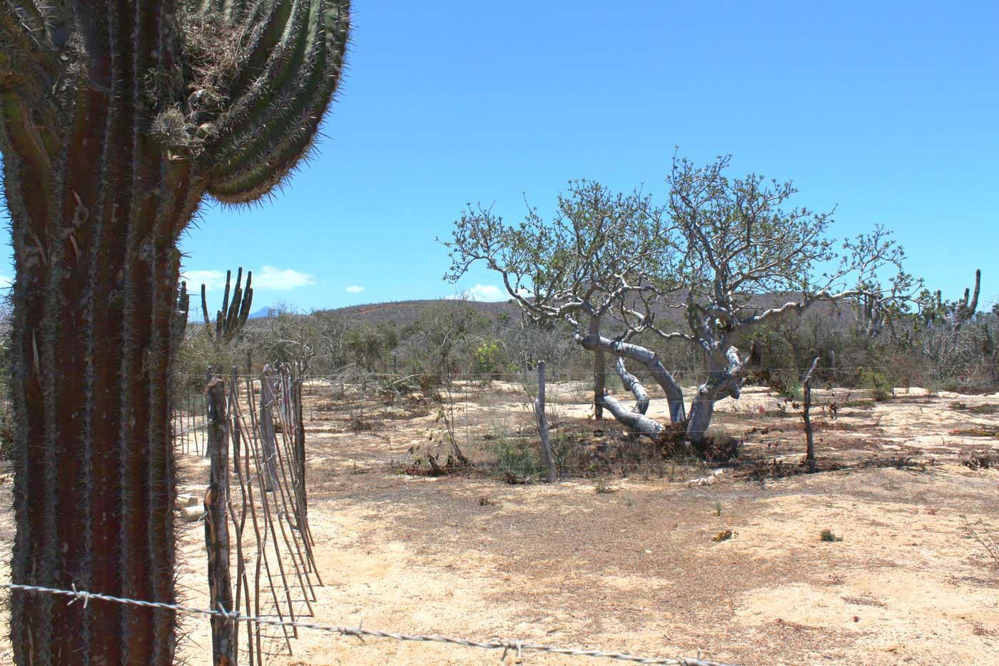 Cactus Garden Lot #1-9
