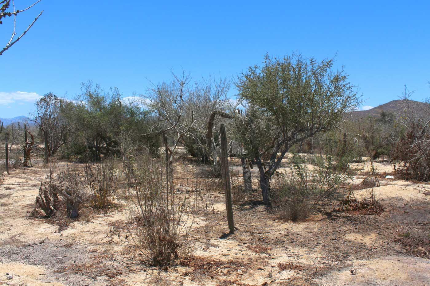 Cactus Garden Lot #1-13
