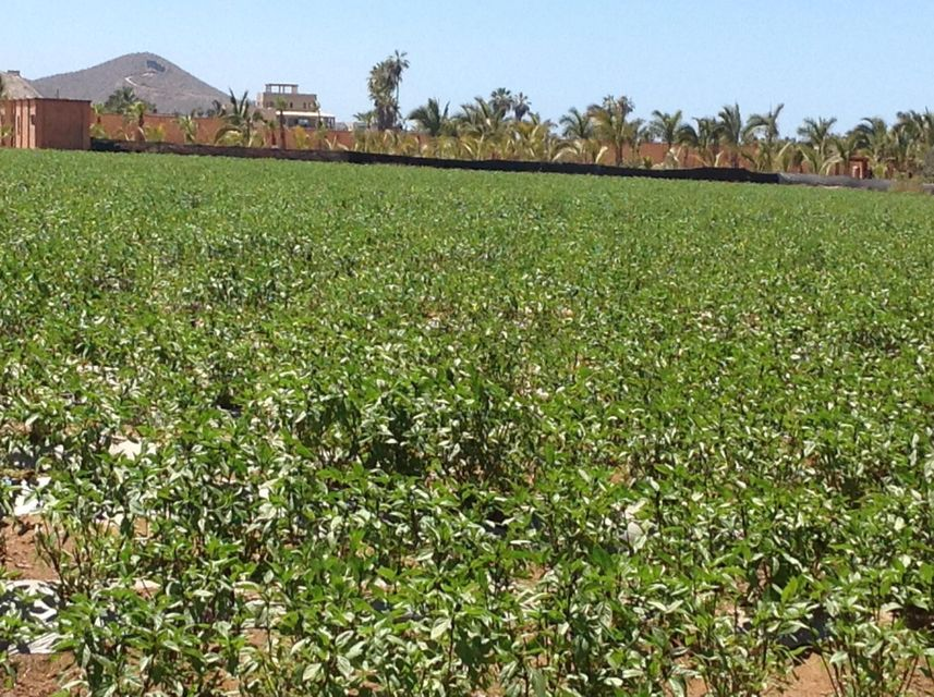 Huerta El Pajaro-5