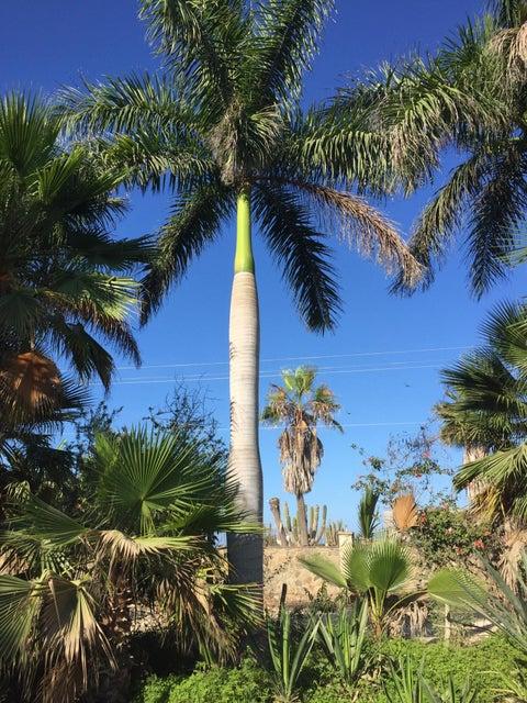 Tropico de Cancer Lot-2