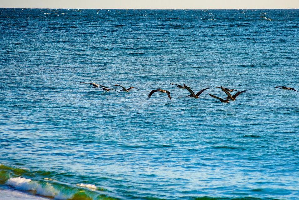 Boca del Salado Lote 185 Hect-6