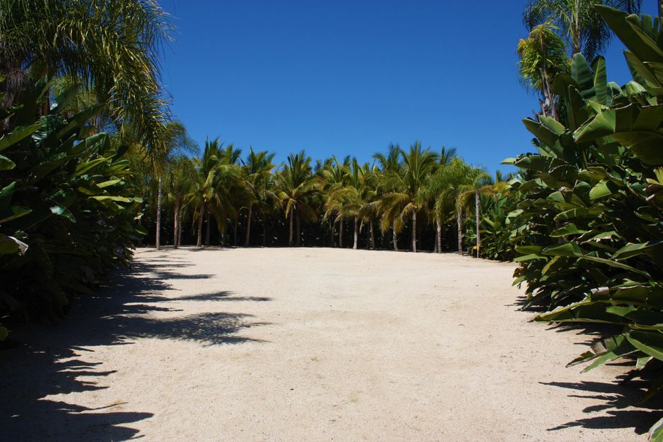 PALM ORCHARD OceanFront 1-21