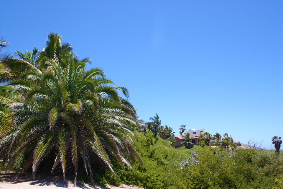 PALM ORCHARD OceanFront 6-3