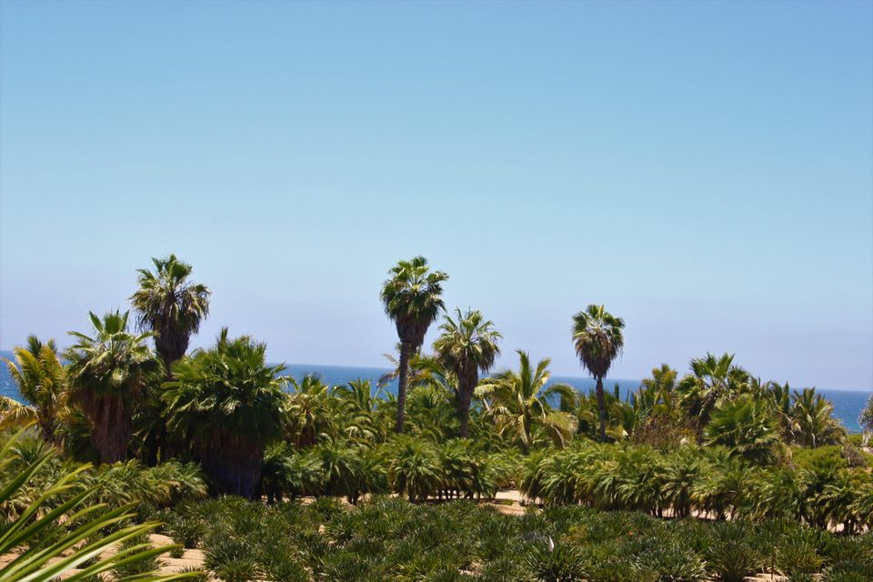 PALM ORCHARD OceanFront 6-16