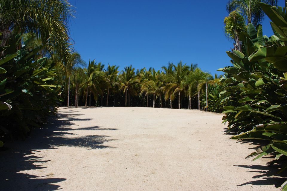 PALM ORCHARD OceanFront 6-21