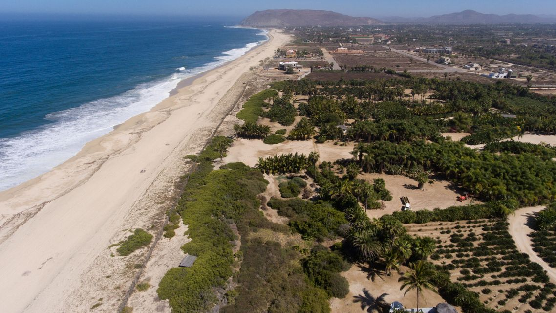 PALM ORCHARD OceanFront 1-27
