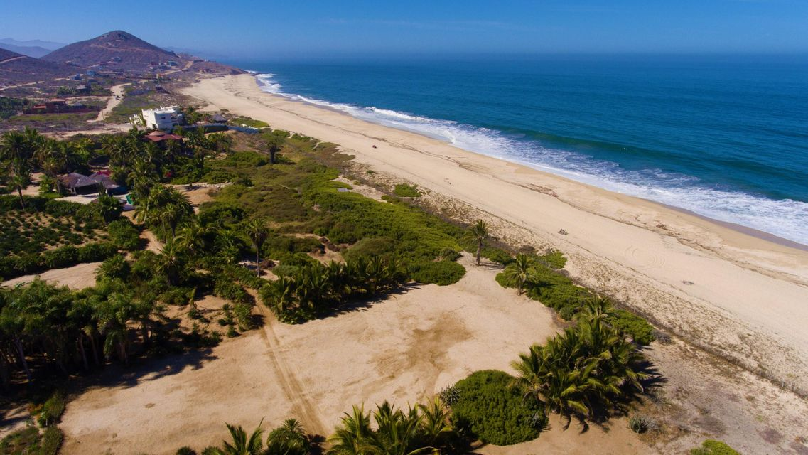 PALM ORCHARD OceanFront 6-25