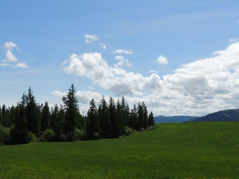 Land for Sale at 39745 Highway 95 39745 Highway 95 Plummer, Idaho 83851 United States