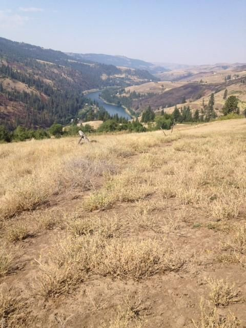 Land for Sale at NKA River Pointe NKA River Pointe Lenore, Idaho 83541 United States