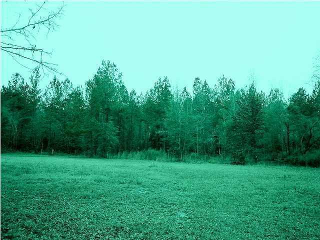 528  Pappa Cemetery Road Branchville, SC 29432