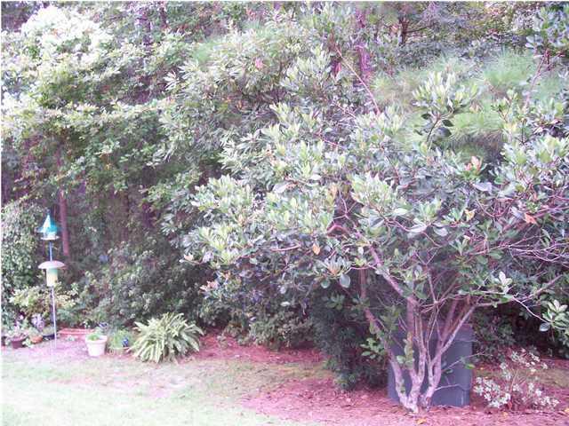 202  Tree Branch Circle Summerville, SC 29483
