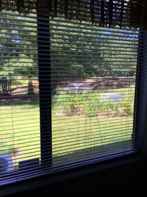 2321  Treescape Dr Charleston, SC 29414