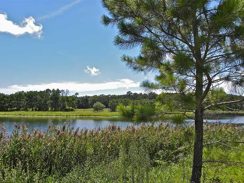 The Farms at Brick House Plantation Lots For Sale - 0 River, Johns Island, SC - 2